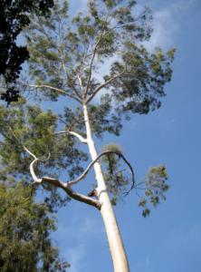 tree lopping brisbane southside